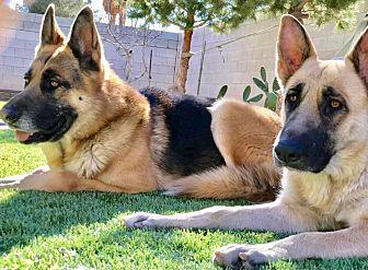 Bella & Junior Photo #1