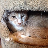 Adopt A Pet :: Twinkle - Freeport, NY