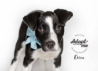 Adopt A Pet :: Erica  - Houston, TX