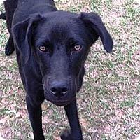 Adopt A Pet :: Matty - Starkville, MS