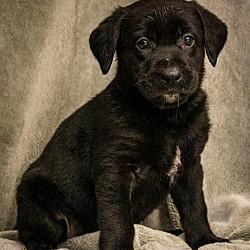 Available pets at Coastal K9 German Shepherd Rescue San
