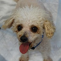 Adopt A Pet :: Roscoe - Tacoma, WA