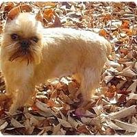 Adopt A Pet :: ALLIE - ADOPTION PENDING - Cumming, GA