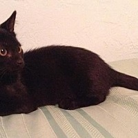Adopt A Pet :: Louise - Sarasota, FL