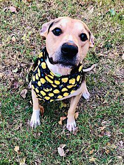 Adopt A Pet :: Bean  - Oklahoma City, OK