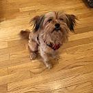 Adopt A Pet :: Myron