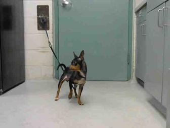 Adopt A Pet :: LUNA  - Wilmington, NC