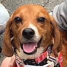 Adopt A Pet :: Watson *Adopt or Foster*