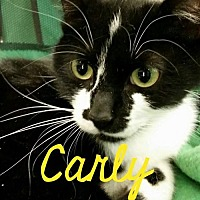 Adopt A Pet :: Carly - Grand Blanc, MI