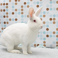 Adopt A Pet :: April Flowers - Los Angeles, CA