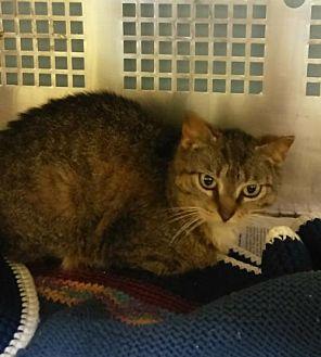 Adopt A Pet :: Natasha  - Mt Vernon, IN