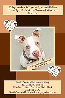 Adopt A Pet :: Toby  - Windsor, NC
