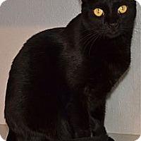 Adopt A Pet :: Sanibel - Deerfield Beach, FL