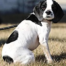 Adopt A Pet :: Bowser