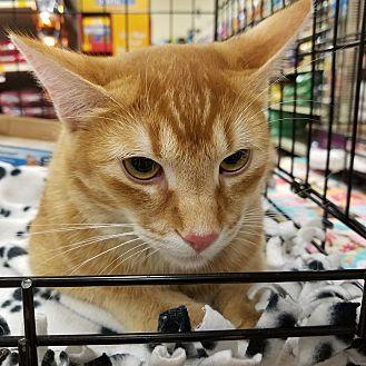 Adopt A Pet :: Whataburger  - Dallas, TX