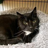Adopt A Pet :: PAW KITTY - Smithtown, NY