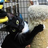 Adopt A Pet :: Koi - Deerfield Beach, FL