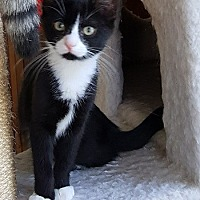Adopt A Pet :: Vickie - Lutherville, MD