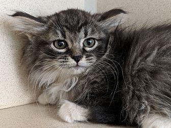 Adopt A Pet :: Jenny  - Laramie, WY