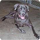 Adopt A Pet :: BlueBerrie