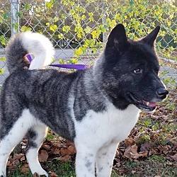 Puppies for Sale in Virginia Beach Virginia - Adoptapet com