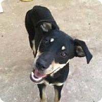 Adopt A Pet :: Chance - Starkville, MS