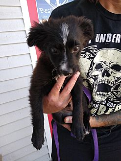Adopt A Pet :: Wilbur  - Seattle, WA