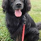 Adopt A Pet :: Berkley-great hiking partner!
