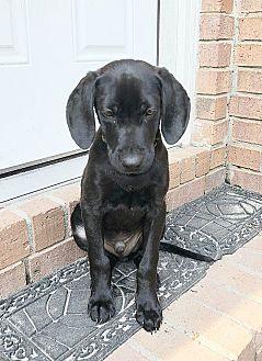 Adopt A Pet :: Calum  - Camden, SC