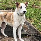 Adopt A Pet :: BLUE ROSE
