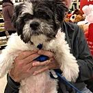 Adopt A Pet :: Sammie