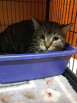 Adopt A Pet :: Sonny  - Moose Jaw, SK