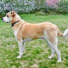 Adopt A Pet :: BREWER