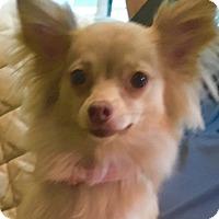 Adopt A Pet :: Sofie - Atlanta, GA