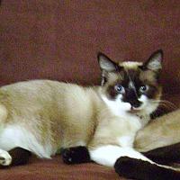 Adopt A Pet :: Sophia (COURTESY POST) - Baltimore, MD