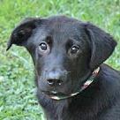 Adopt A Pet :: Claude B
