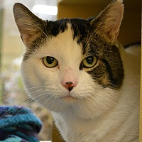 Adopt A Pet :: Dylan - Worcester, MA
