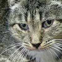 Adopt A Pet :: Sunshine - Norristown, PA