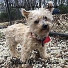 Adopt A Pet :: Wally