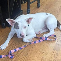 Two by Two Rescue in Helena, Alabama
