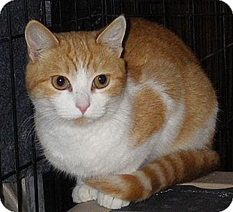 Medium Hair Cats For Adoption