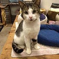Adopt A Pet :: Grayson - St. James City, FL