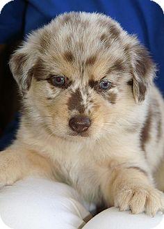Englewood Fl Golden Retriever Meet Cami A Pet For Adoption