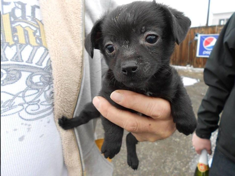 French Bulldog Puppies Yakima Wa