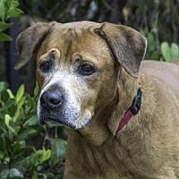 Adopt A Pet :: YOGI - West Palm Beach, FL