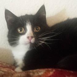 Cat Adoption Sacramento California