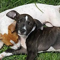 Adopt A Pet :: Jenna - Tampa, FL