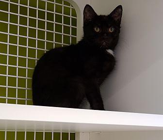 Adopt A Pet :: notme  - millville, NJ