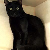 Adopt A Pet :: Romeo - Key Largo, FL