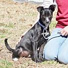Adopt A Pet :: Orlando B